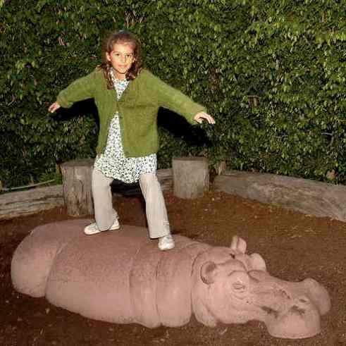 hippo_1