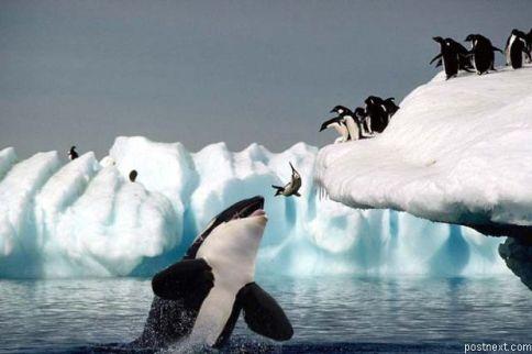 whale_penguin