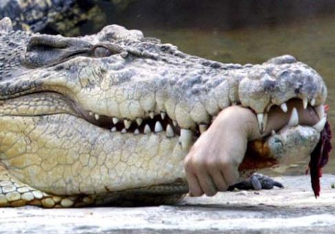 crocodilerock